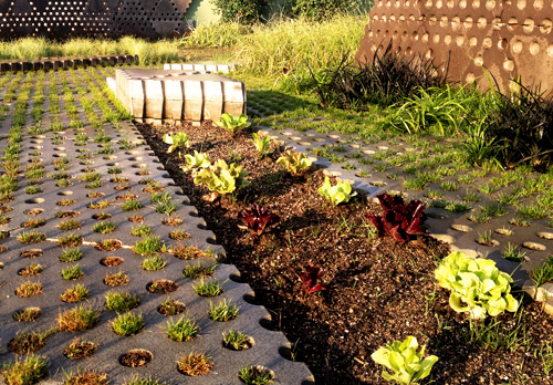 Create your own garden or urban orchard in your company